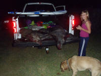 rockport hog hunting